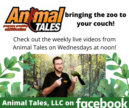 Animal Tales: bringing the zoo to your couch!